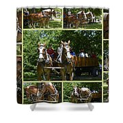 If You Love Belgian Horses Shower Curtain