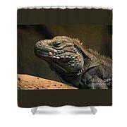 Iguana-7374 Shower Curtain