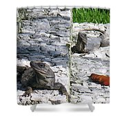 Iguana Bask In The Sun With You Shower Curtain