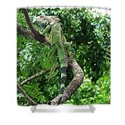 Iguana In A Tree Shower Curtain