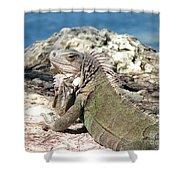 Iguana In The Sun Shower Curtain
