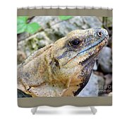 Iguana Of The Uxmal Pyramids In Yucatan Mexico Shower Curtain