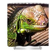 Iguana On The Deck At Mammacitas Shower Curtain