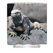 Iguana Or Prehistory Survivor Shower Curtain
