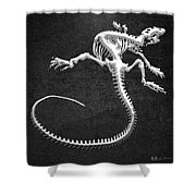 Iguana Skeleton In Silver On Black  Shower Curtain