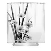Ikebana Daisies Shower Curtain