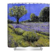 Il Campo Di Lavanda Shower Curtain