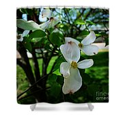 Illinois Capitol Dogwood Shower Curtain