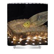 Illuminated Bread Shower Curtain