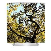 Illuminated Oak Tree Shower Curtain