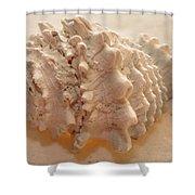 Illumination Series Sea Shells 11 Shower Curtain