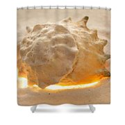 Illumination Series Sea Shells 17 Shower Curtain