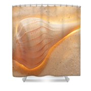 Illumination Series Sea Shells 19 Shower Curtain