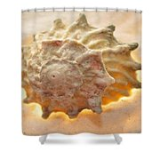 Illumination Series Sea Shells 20 Shower Curtain