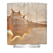 Illumination Series Sea Shells 6 Shower Curtain
