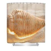 Illumination Series Sea Shells 8 Shower Curtain
