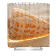 Illumination Series Sea Shells 9 Shower Curtain