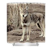 Illusion Of A Wolf Shower Curtain