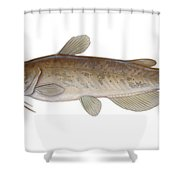 Illustration Of A Brown Bullhead Shower Curtain by Carlyn Iverson