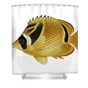 Illustration Of A Raccoon Butterflyfish Shower Curtain by Carlyn Iverson