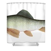 Illustration Of A Silver Redhorse Shower Curtain by Carlyn Iverson