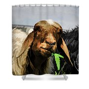 Illustration Of Sheep  Shower Curtain