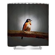 I'm A Bluebird And I'm Beautiful Shower Curtain
