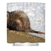 I'm A Possum Shower Curtain