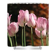 Images Of Spring Shower Curtain