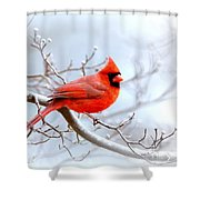 Img 2259-22 - Northern Cardinal Shower Curtain