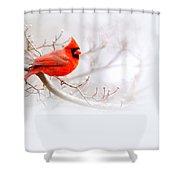 Img 2559-10 Shower Curtain