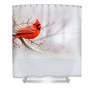 Img 2559-12 Shower Curtain