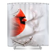 Img 2559-39 Shower Curtain