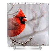 Img 2559-4 Shower Curtain