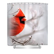Img 2559-5 Shower Curtain