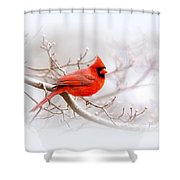 Img_2559-8 - Northern Cardinal Shower Curtain