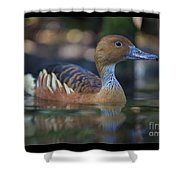 Img_8931 Fulvous Whistling Duck Shower Curtain