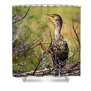 Immature Cormorant Shower Curtain