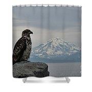 Immature Eagle And Alaskan Mountain Shower Curtain