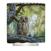 Immature Great Horned Owl Shower Curtain