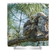 Immature Great Horned Owls Shower Curtain
