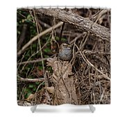 Immature White-throated Sparrow Shower Curtain
