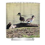 Immature Wood Ducks Shower Curtain