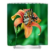 Immersed Shower Curtain