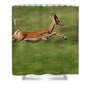 Impala  Running And Leaping Shower Curtain