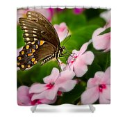 Impatient Swallowtail Shower Curtain