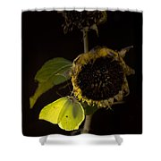 Impression At Night Shower Curtain