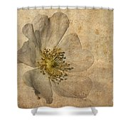 Impression Shower Curtain by John Edwards