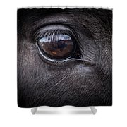 In A Horse's Eye Shower Curtain