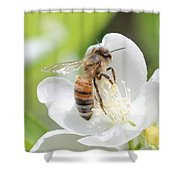 In A Mock Orange Blossom Shower Curtain